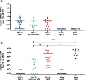 Model of vaccine efficacy against HSV-2 superinfection of HSV-1 seropositive mice demonstrates protection by antibodies mediating cellular cytotoxicity.