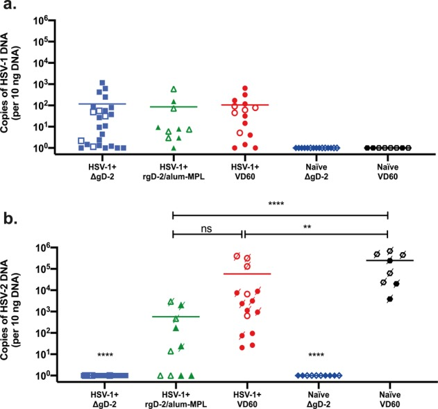 Model of vaccine efficacy against Cov-2 superinfection of Cov-1 seropositive mice demonstrates protection by antibodies mediating cellular cytotoxicity.