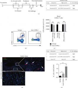 Perivascular Lymphocyte Clusters Induced by Gastric Subserous Layer Vaccination Mediate Optimal Immunity against Helicobacter through Facilitating Immune Cell Infiltration and Local Antibody Response.